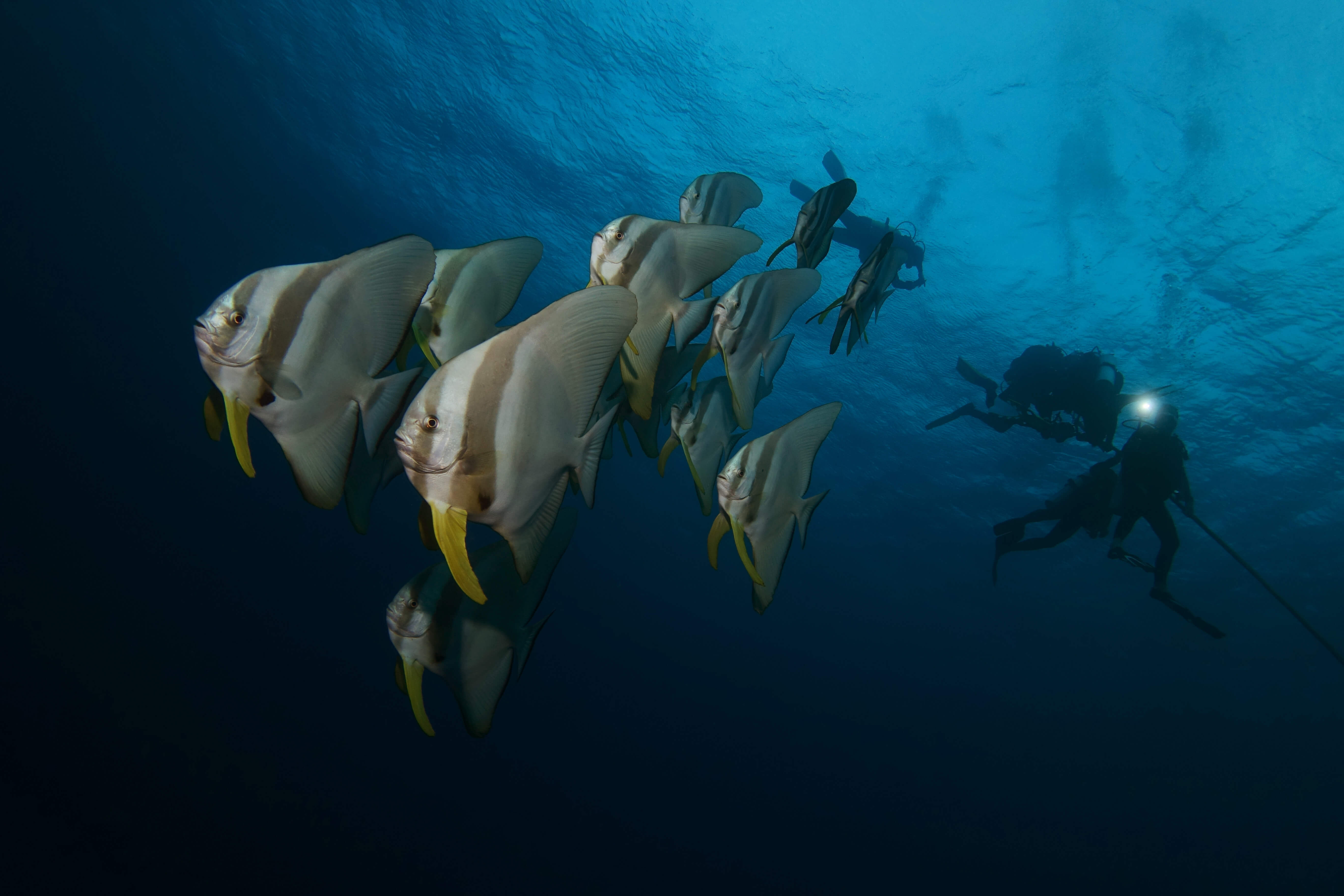 United Divers Egypt Safaga