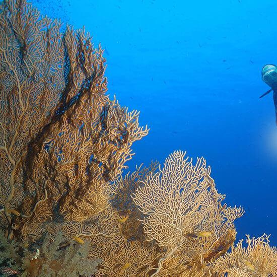 United Divers Egypt Safaga Croisiere Sud