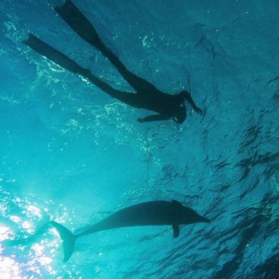 United Divers Egypt Safaga Croisiere Dauphins