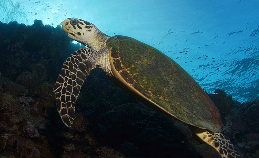 United Divers Egypt Safaga Croisière St John's Reef